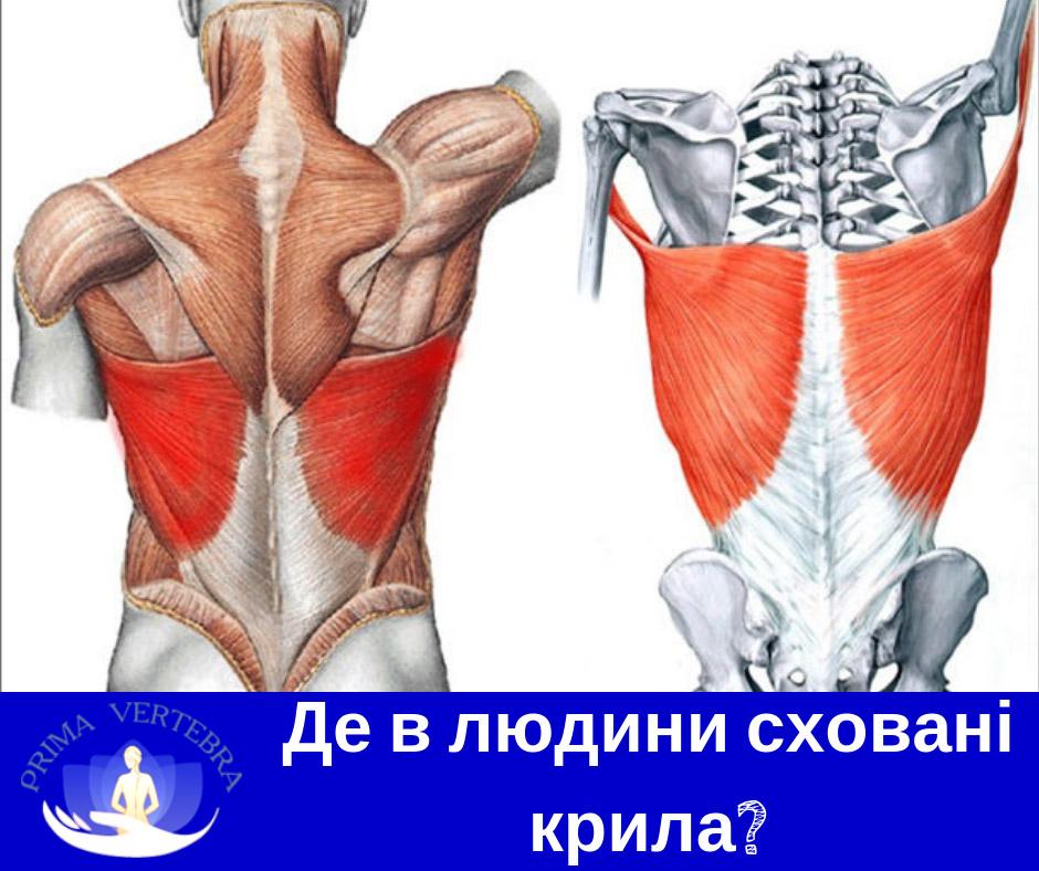 Артрит, запальні зміни у суглобі, поліартрит, Артроз, дегенерації суглобового хряща, Артроз, дегенерації суглобового хряща, деформація суглобу, Бурсит, запалення суглобових , Вертебро-базилярна недостатність, Епіконділіт, Ішалшія, біль у нозі, ураження сідничного нерву, кила міжхребцевого диска, ураження міжхребцевого диска, розрив фіброзного кільця, Контрактури, обмеження рухливості у суглобі, Краніалгія, головний біль, Люмбалгія, біль у попереку, Мононейропатія, ушкодження нервового стовбуру, нестабільність відділів хребта, Остеофіти п´яткових кісток, П´яткова шпора, Плантарний фасциїт, запалення подошвової фасції, Плечо-лопатковий периартроз, синдром замороженого плеча, Плоскостопість, Полінейропатія, множинне ураження періферичних нервів, Протрузія, ураження міжхребцевого диску, Сакроілеїт, запалення крижово-здухвинного суглобу, Синдром хребтової артерії, синовіїт, Сколіотична деформація хребта, сколіоз, Спонділоартроз, Спонділолістез, Спондільоз, розрастання кісткової тканини хребта, Тендінопатія, Торакалгія, Хвороба оперованого хребта, Цервікалгія, біль у шиї, Halux valgus, вальгусна деформація першого пальця стопи, лікування спини, болі в спині лікування, біль в спині лікування, біль в спині поперек лікування, біль в спині в попереку лікування, лікування при болях в спині і попереку, лікування болю в спині в області попереку, біль в спині причини і лікування, біль в спині причини лікування, болі в спині і попереку причини лікування, якщо болить спина лікування, біль в спині поперек ніж лікувати, лікування хребта біль у спині, болі в спині нижче попереку лікування, болить спина в попереку лікування, болить спина в області попереку лікування , болі в спині лікування уколи, м'язові болі в спині лікування, біль в спині лікування уколи, сильно болить спина ніж лікувати, сильно болить спина як лікувати, лікування при болях в спині і суглобах, болю в спині при вагітності лікування, лікування при болях в спині уколи, гострий біль в спині лікування, болі в спині лікув