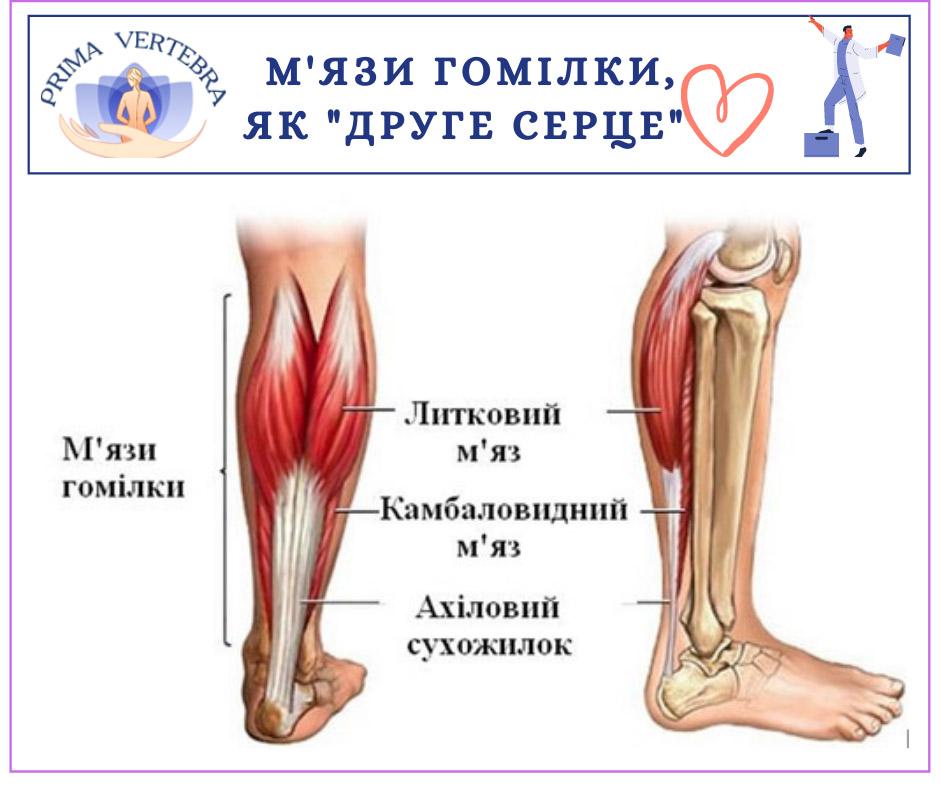 Артрит, запальні зміни у суглобі, поліартрит, Артроз, дегенерації суглобового хряща, Артроз, дегенерації суглобового хряща, деформація суглобу, Бурсит, запалення суглобових , Вертебро-базилярна недостатність, Епіконділіт, Ішалшія, біль у нозі, ураження сідничного нерву, кила міжхребцевого диска, ураження міжхребцевого диска, розрив фіброзного кільця, Контрактури, обмеження рухливості у суглобі, Краніалгія, головний біль, Люмбалгія, біль у попереку, Мононейропатія, ушкодження нервового стовбуру, нестабільність відділів хребта, Остеофіти п´яткових кісток,  П´яткова шпора, Плантарний фасциїт, запалення подошвової фасції, Плечо-лопатковий периартроз, синдром замороженого плеча, Плоскостопість, Полінейропатія, множинне ураження періферичних нервів, Протрузія, ураження міжхребцевого диску, Сакроілеїт, запалення крижово-здухвинного суглобу, Синдром хребтової артерії, синовіїт, Сколіотична деформація хребта, сколіоз, Спонділоартроз, Спонділолістез, Спондільоз, розрастання кісткової тканини хребта, Тендінопатія, Торакалгія, Хвороба оперованого хребта, Цервікалгія, біль у шиї, Halux valgus, вальгусна деформація першого пальця стопи, лікування спини, болі в спині лікування, біль в спині лікування, біль в спині поперек лікування, біль в спині в попереку лікування, лікування при болях в спині і попереку, лікування болю в спині в області попереку, біль в спині причини і лікування, біль в спині причини лікування, болі в спині і попереку причини лікування, якщо болить спина лікування, біль в спині поперек ніж лікувати, лікування хребта біль у спині, болі в спині нижче попереку лікування, болить спина в попереку лікування, болить спина в області попереку лікування , болі в спині лікування уколи, м'язові болі в спині лікування, біль в спині лікування уколи, сильно болить спина ніж лікувати, сильно болить спина як лікувати, лікування при болях в спині і суглобах, болю в спині при вагітності лікування, лікування при болях в спині уколи, гострий біль в спині лікування, болі в спині ліку